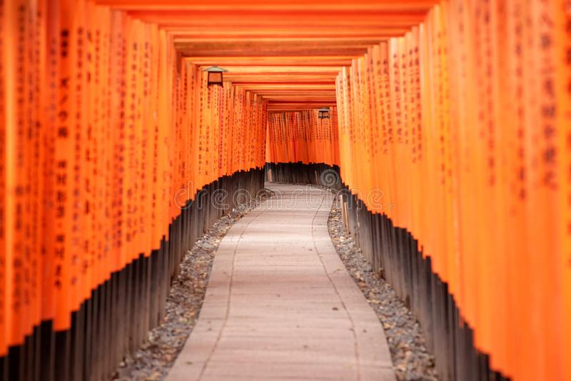 Portes rouges de Torii dans le tombeau de Fushimi Inari photos stock