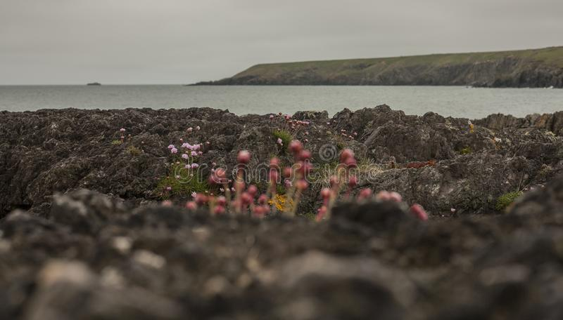 Porthor, as areias de assobio, Gales norte - camadas de rokcs fotos de stock