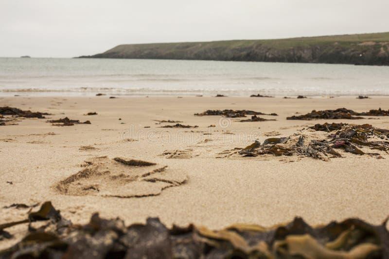 Porthor e as areias de assobio, Gales imagens de stock