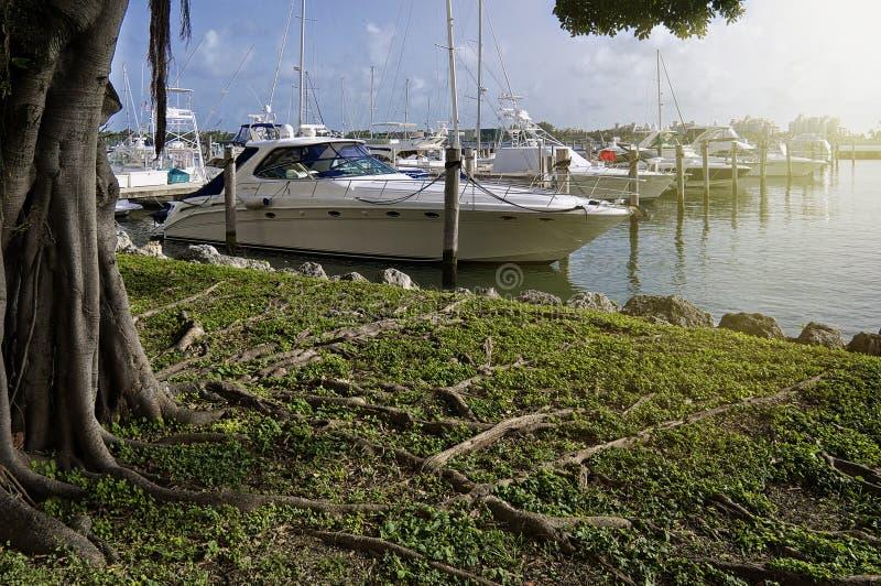 Porticciolo di Miami fotografia stock libera da diritti