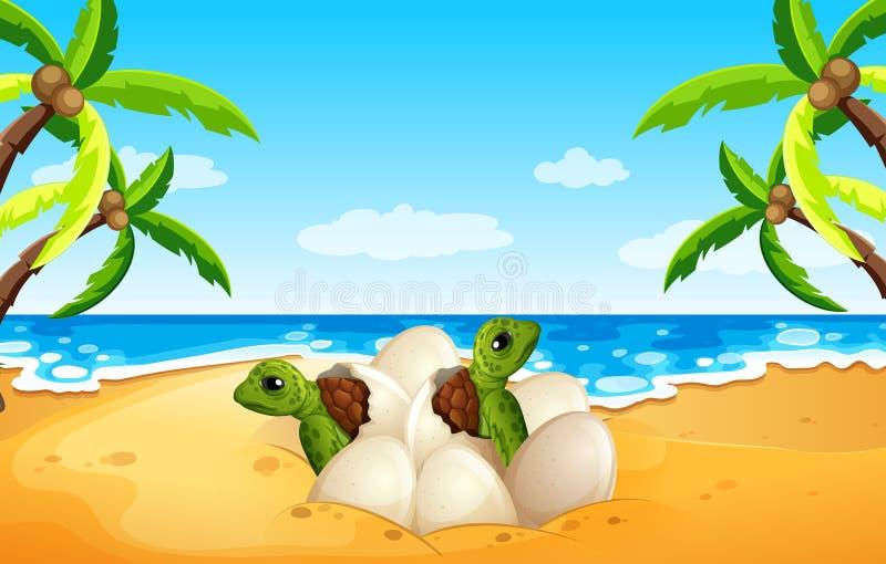Portilla de la tortuga de mar del bebé en la playa libre illustration