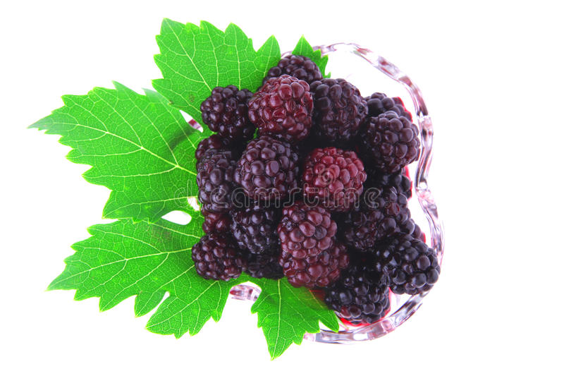 Download Portion of wild berry stock image. Image of bright, closeup - 16025835