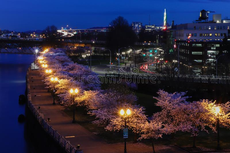 Portland Oregon Cherry Blossoms in Downtown in spring stock photo