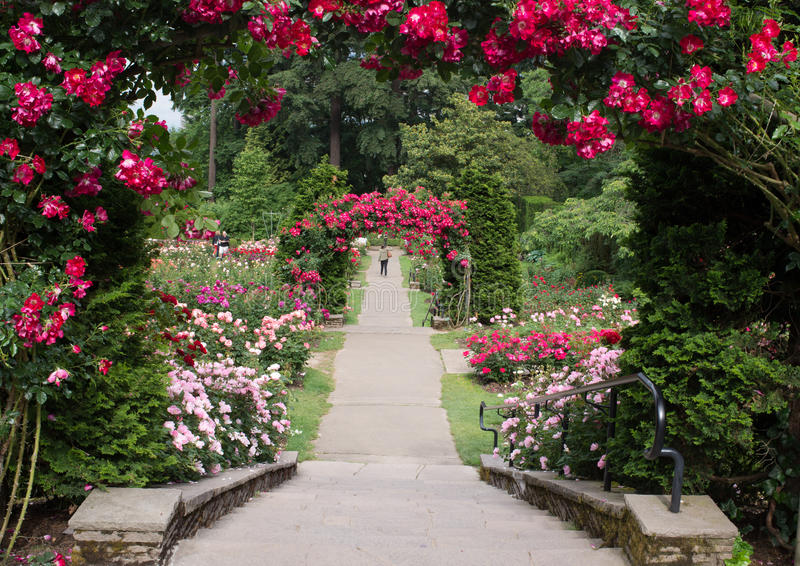 Portland Oregon Rose Garden royaltyfri foto