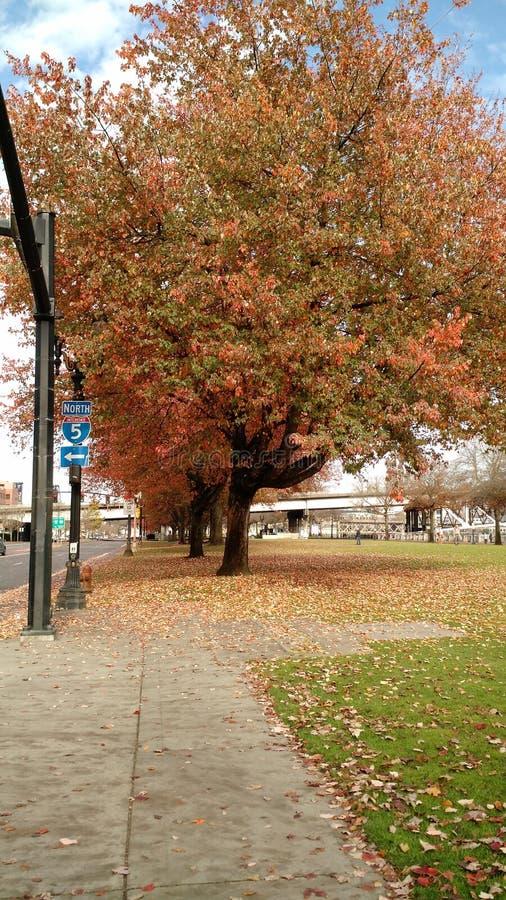 Portlandzka jesień obrazy royalty free