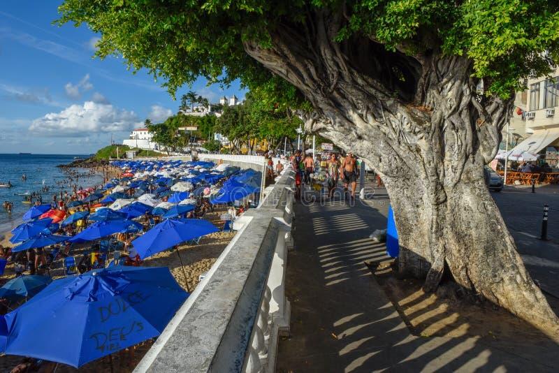 Porto da Barra strand i Salvador Bahia p? Brasilien royaltyfri foto