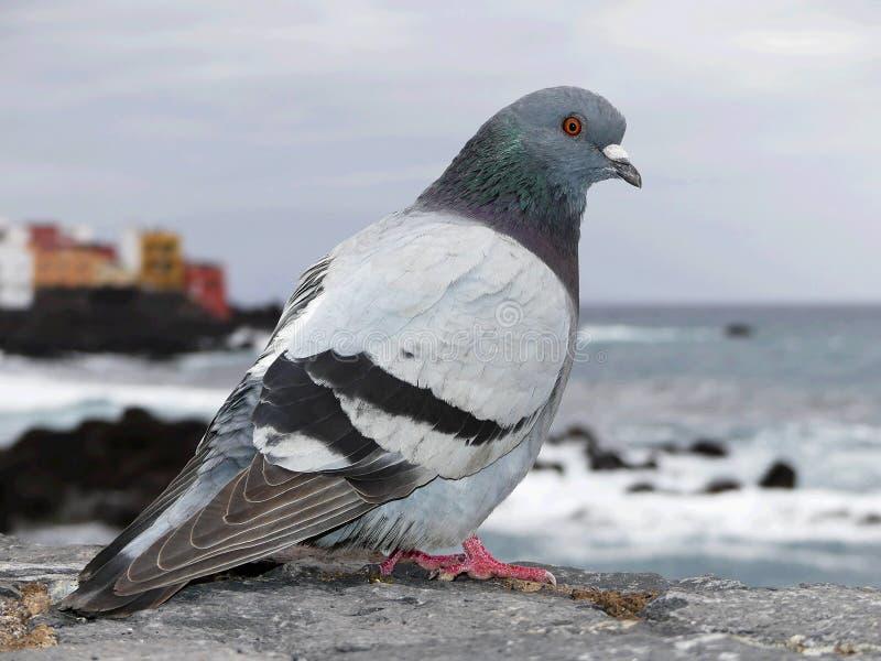 Porto DE La Cruz, het eiland van Tenerife, Spanje stock fotografie