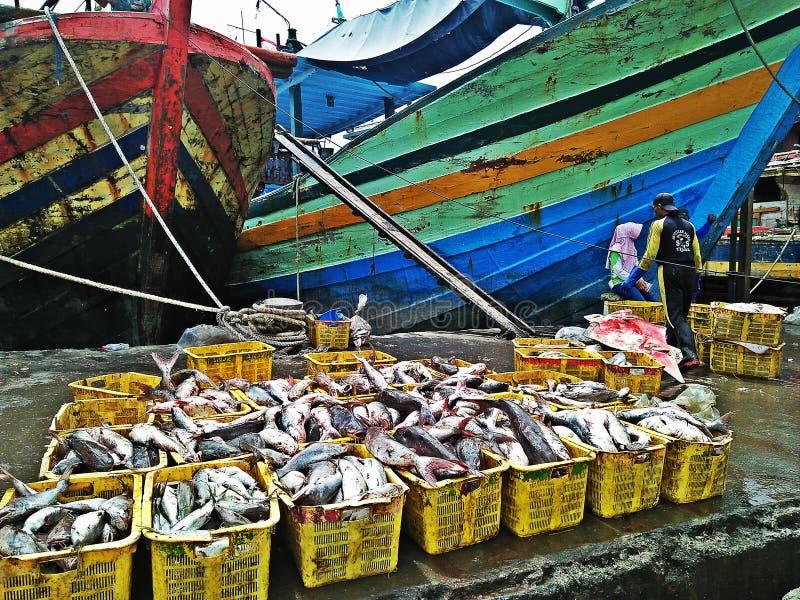 Porto dos peixes fotografia de stock