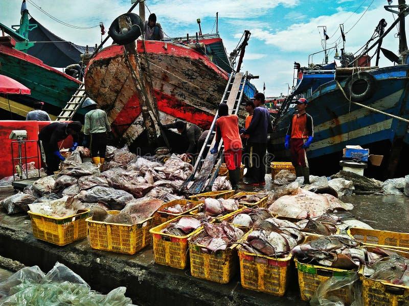 Porto dos peixes foto de stock