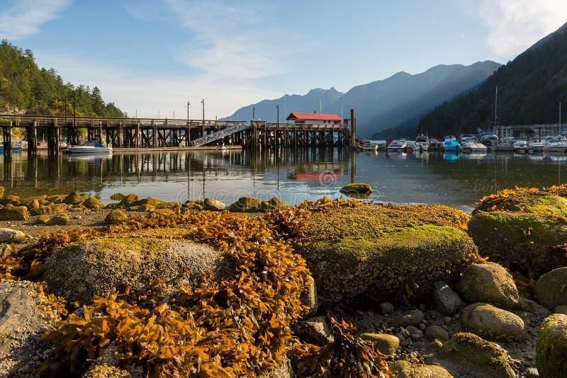 Porto na baía em ferradura durante a maré baixa em Vancôver BC Canadá foto de stock royalty free