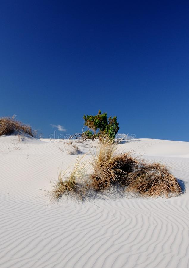 Download Porto Pino stock photo. Image of landscape, pino, sand - 30100558