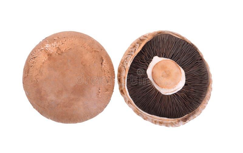 Portobello mushroom isolated on white background.  stock image