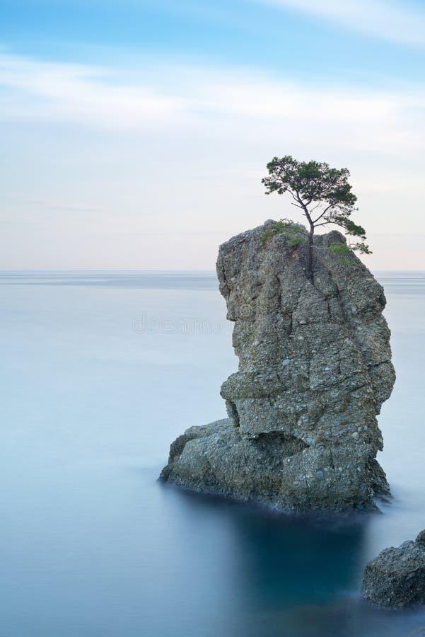 Portofino. Roca del árbol de pino. Exposición larga. Italia imagenes de archivo