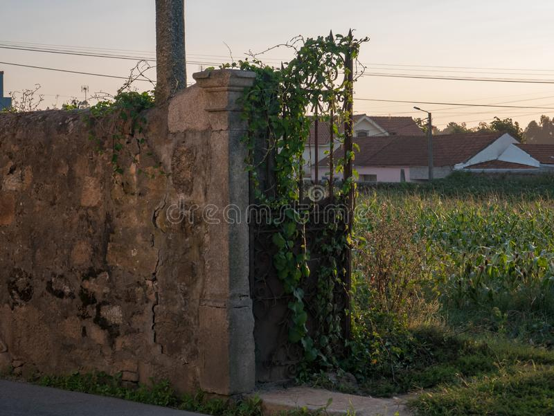 Portone del vecchio, ghisa rustico e invaso con le viti/edera, in parete di pietra ruvida nel Portogallo fotografia stock libera da diritti