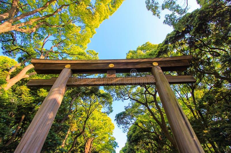 Portone di Torii lungo l'approccio boscoso a Meiji Shrine, Shibuya, Tokyo, Giappone fotografia stock
