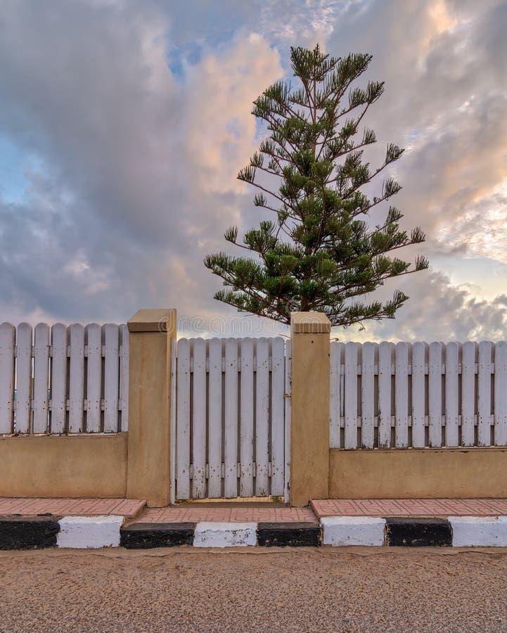 Portone e recinto di giardino di legno stagionati bianchi con fondo di singolo albero e del cielo nuvoloso a tempo di alba immagini stock