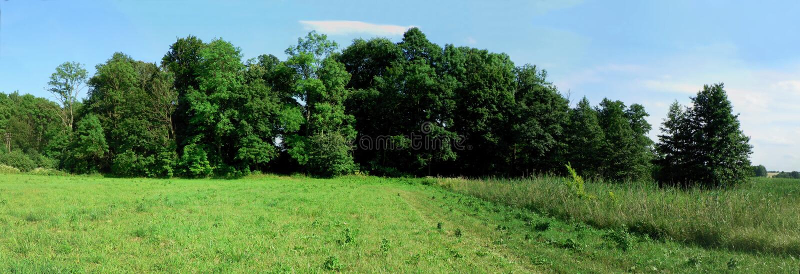 Forest Gates fotografia stock