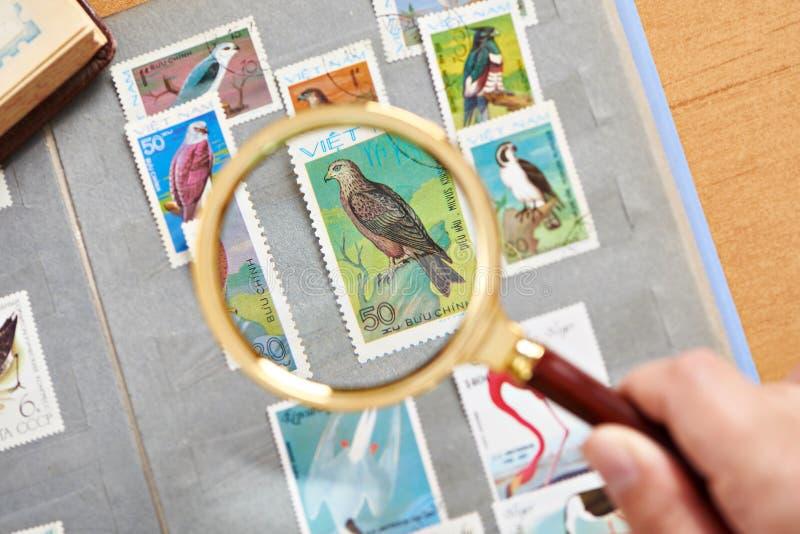 Portostämpel med fåglar under förstoringsapparaten på album royaltyfri fotografi