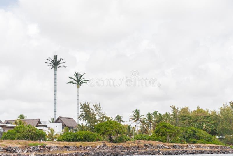 PORTOWY LOUIS MAURITIUS, PAŹDZIERNIK, - 06, 2015: Drzewko Palmowe jako antena w Mauritius fotografia royalty free