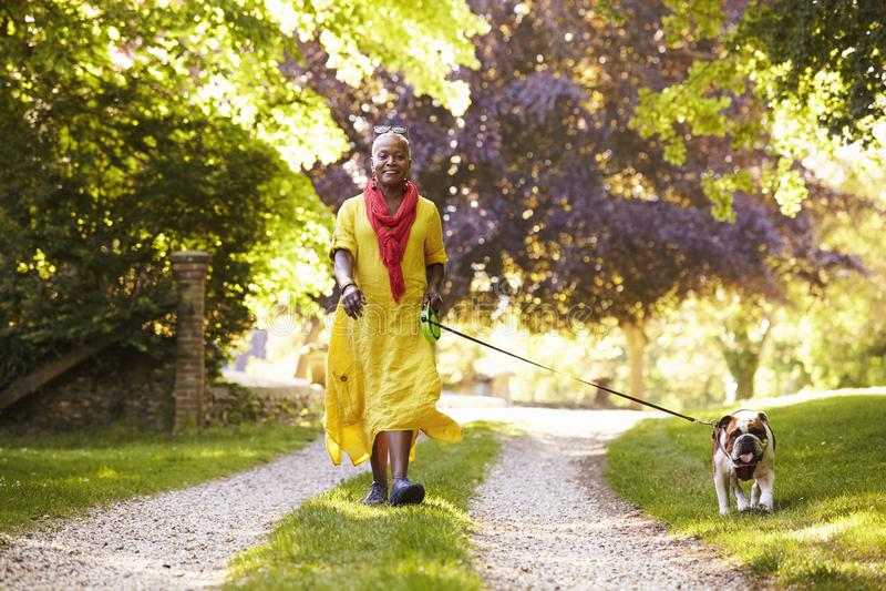 Porträt ältere Frauen-der gehenden Haustier-Bulldogge in der Landschaft stockfoto