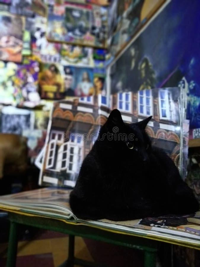 Porträt Cat Black lizenzfreie stockbilder