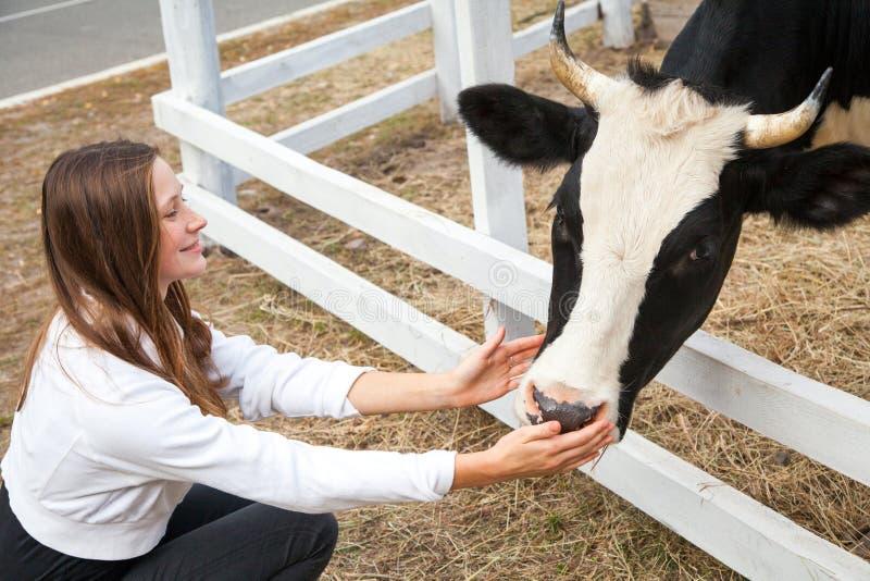 Porträt der Frau arbeitend in der Scheune Lächelndes bereitstehendes Vieh der Landwirtfrau draußen lizenzfreie stockfotografie
