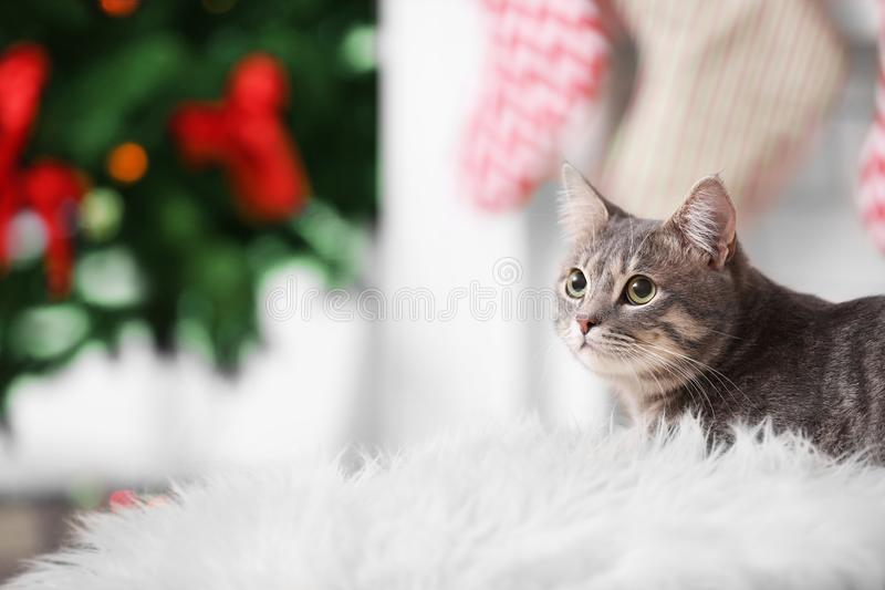 Porträt der Katze der getigerten Katze liegend auf weißem Plaid lizenzfreie stockbilder