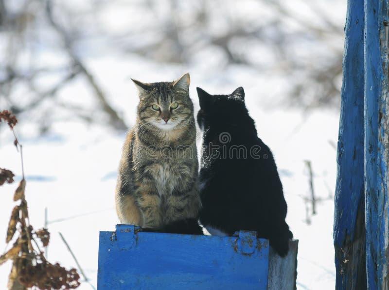 Porträt der lustigen netten Katze zwei, die draußen auf einem sonnigen Frühling sitzt lizenzfreie stockbilder