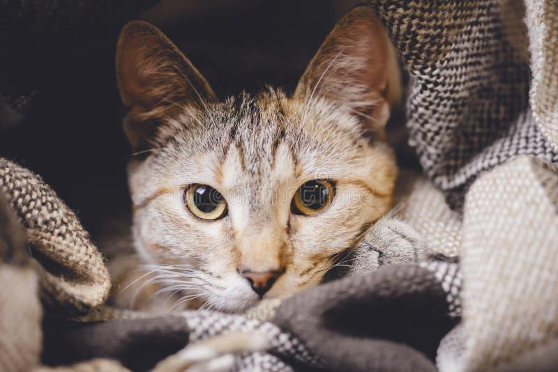 Porträt der netten Katze der getigerten Katze mit großen Augen stockbild