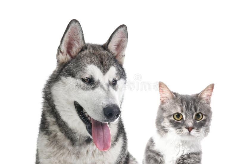 Porträt der netten Katze und des Hundes auf weißem Hintergrund lizenzfreie stockfotografie