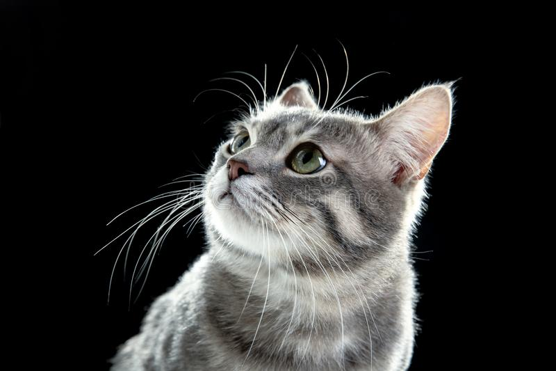Porträt der netten lustigen Katze lizenzfreie stockbilder