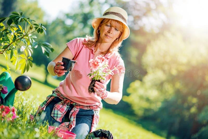 Porträt der reifen Frau zu Hause im Garten arbeitend stockfotos