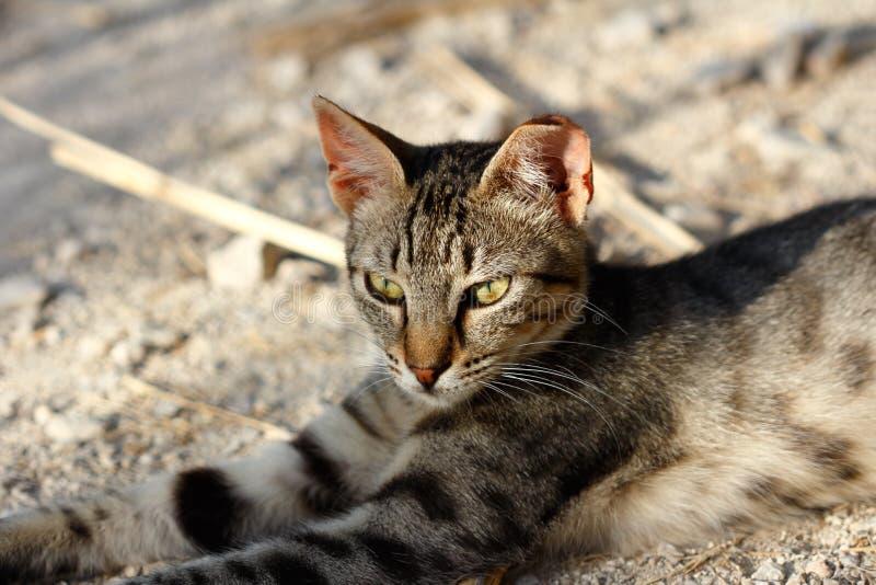 Porträt der wilden braun-grauen gestreiften Katze in der Landschaft stockbilder