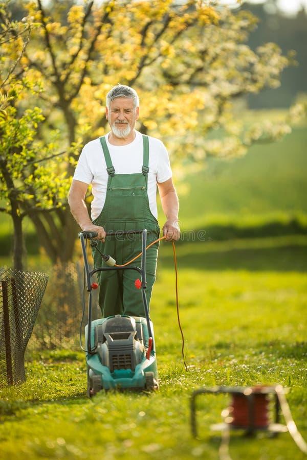 Porträt des älteren Mannes im Garten arbeitend, um seinem reizenden Obstgarten kümmernd stockfoto