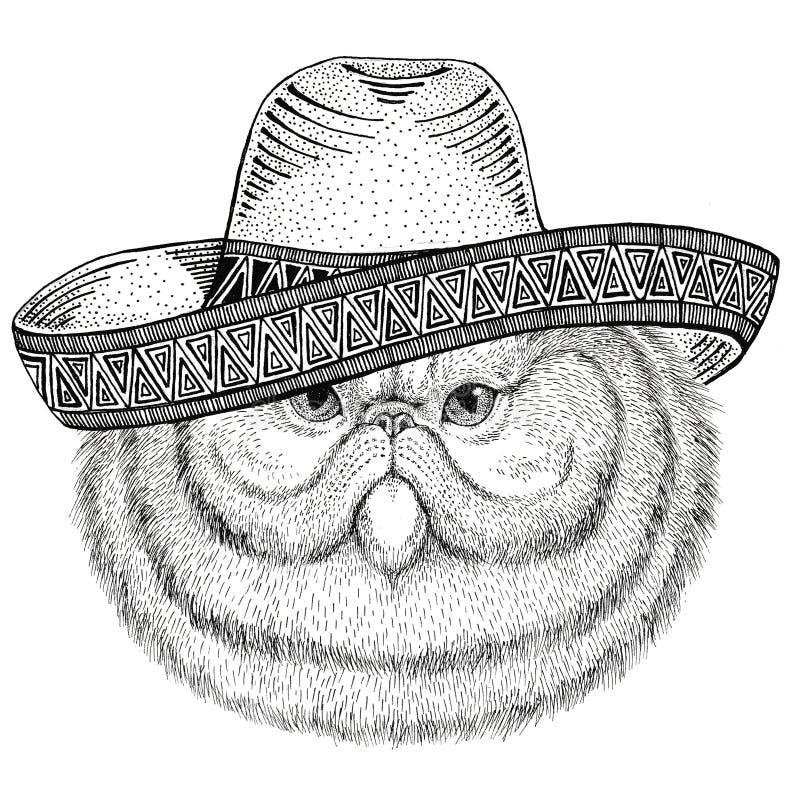 Porträt des flaumigen Mexiko-Fiestas Sombrero des wilden Tieres der persischen Katze tragenden der mexikanischen wilden Westens P lizenzfreie abbildung