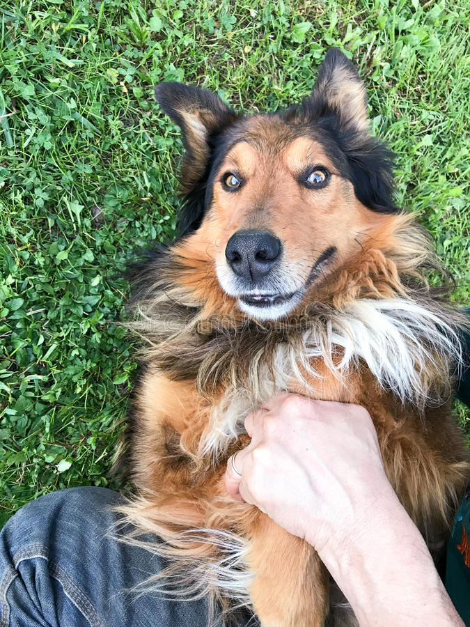 Porträt des Hundehaustieres spielend im Gras mit seinem Meister stockfoto