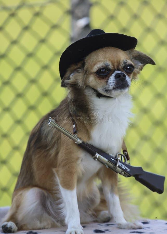 Porträt des Hundes lizenzfreie stockfotografie