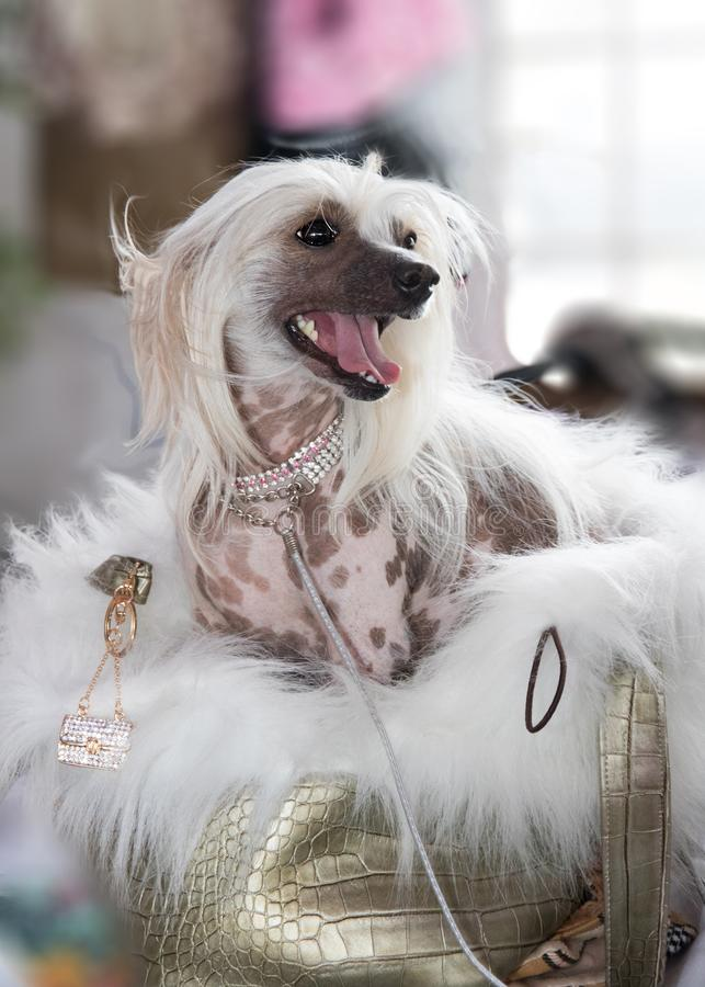Porträt des Hundes stockfoto