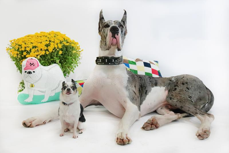 Porträt des Hundes stockbild