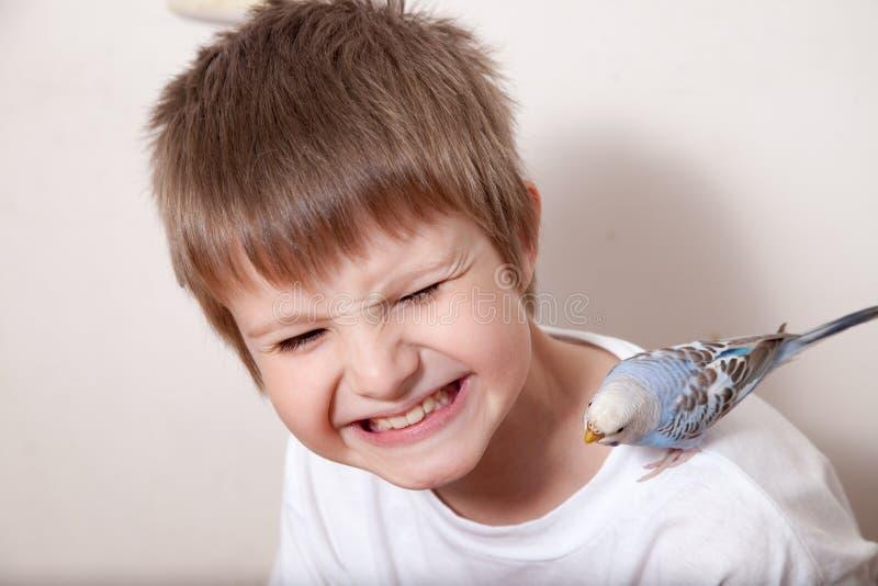 Porträt des Jungen mit Papageien stockbild