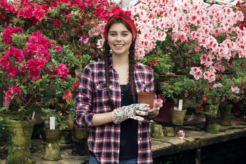 Porträt des lächelnden Gärtners der jungen Frau mit den Zöpfen, die Topf halten, wählt, welche zu verpflanzen Blume lizenzfreie stockfotografie