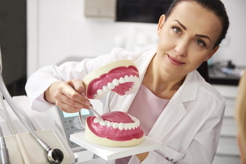Portr?t des l?chelnden Zahnarztes k?nstliche Gebisse halten lizenzfreies stockbild