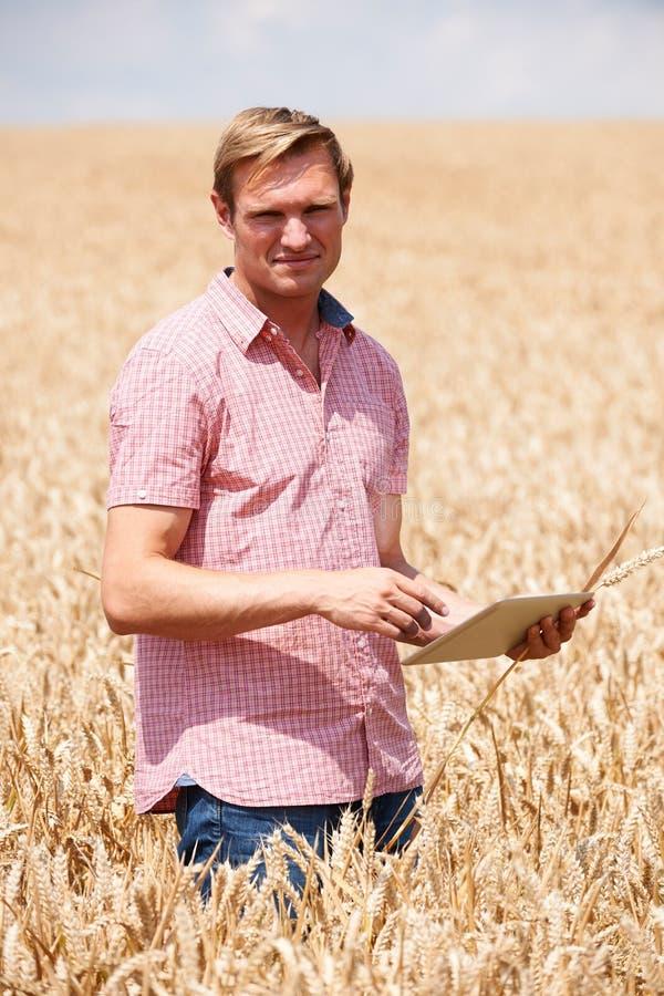 Porträt des Landwirts With Digital Tablet auf dem Weizen-Gebiet, das Ernte kontrolliert stockfotografie