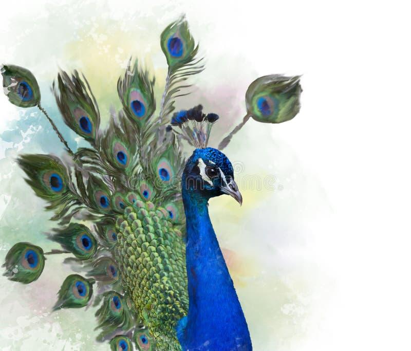 Porträt des Pfauaquarells lizenzfreie abbildung
