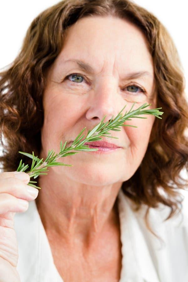 Porträt des riechenden Rosmarins der reifen Frau stockbilder