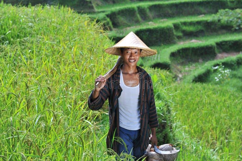 Porträt des traditionellen organischen Reislandwirts mit seinen Werkzeugen stockbild