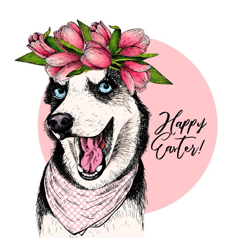 Porträt des tragenden Krone und Bandana Tulpe des sibirischen Huskys Hunde Willkommener Frühling Hand gezeichnete farbige Vektori lizenzfreie abbildung
