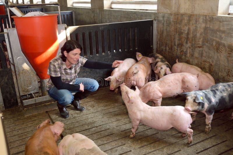 Porträt einer Bauernhoffrau auf einem Schweinezuchtbetrieb stockfoto