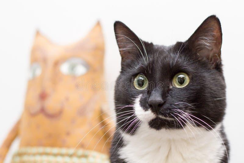 Porträt einer beunruhigenden Schwarzweiss-Katze mit einer Katzepuppe im Hintergrund stockfotografie