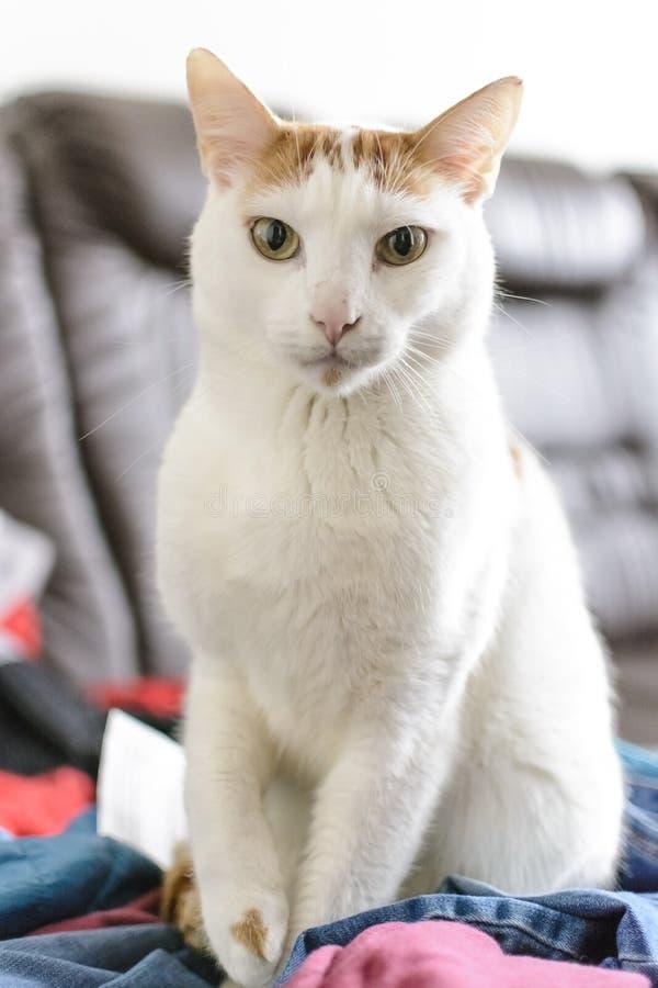 Porträt einer Katze, die auf Kleidung sitzt lizenzfreie stockfotos
